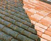 meilleur anti-mousse de toiture