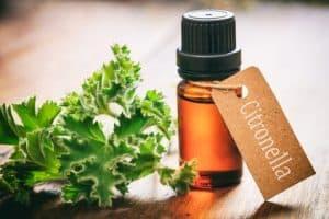 huile essentielle citronnelle anti moustique