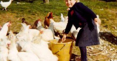 Comment élever des poules chez soi
