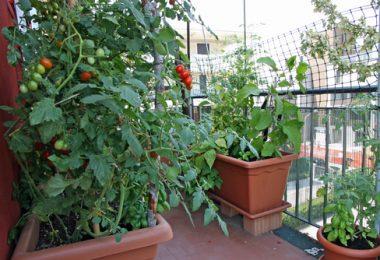 faire pousser des légumes sur un balcon