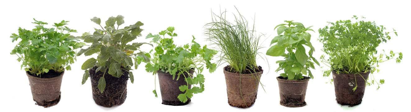 12 plantes aromatiques faciles cultiver en pot bricolea. Black Bedroom Furniture Sets. Home Design Ideas