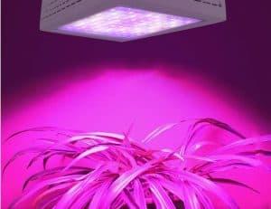 meilleure lampe de croissance